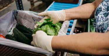 Fotoreportage Adamah Biohof @ Wolfgang Lehner, verschiedene Gemüsesorten